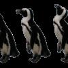 パペットワープで操り人形のようにペンギンを動かそう -Photoshop-