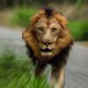 ぼかしフィルターでライオンがせまってくる動きを作ろう -Photoshop-